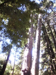 Just a tree, that might be three hundred feet high